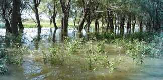 Campo Delta