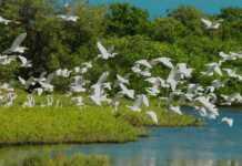 Aves de humedales