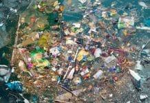 Plásticos en peces