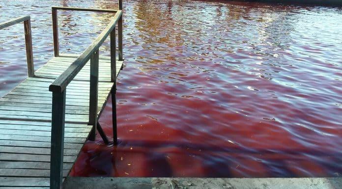 Río Tigre rojo