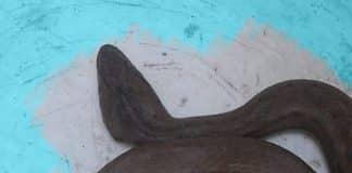 Víbora en el Rama Negra