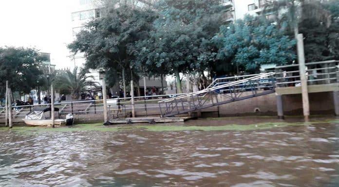 Río Tigre partículas verdes