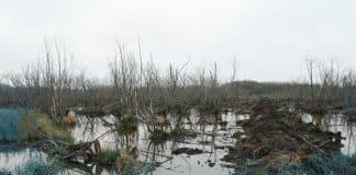 Humedales de La Plata