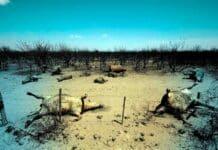crisis-ambiental